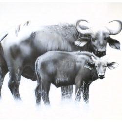 buffalos-mara-2015