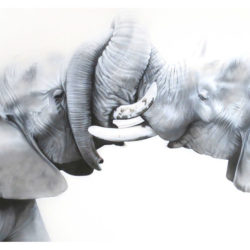 elephants-mara-2015