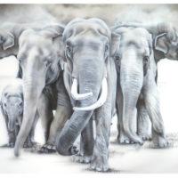 elephants-zoo-2015