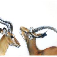 gazellen-mara-2015