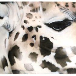 giraffe-mara-2015