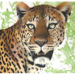 leopard-mara-2015