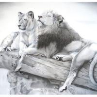 lions-zoo-2015