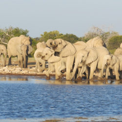 Afrikanischer-Elefant-2-web